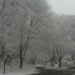 Snow in Reston
