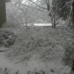 Reston snow