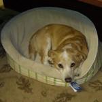 Fritz the dog
