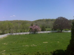 lawn with apple blossoms