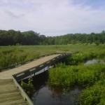 boardwalk at Huntley Meadows