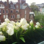 Torpedo Factory Tulips