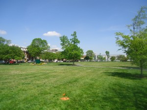 The field stretches several blocks