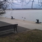 Geese on the Potomac River