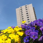 Flowers at Watergate at Landmark