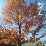 Fall in Northern Virginia
