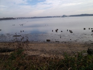The Potomac River is home to birds