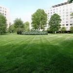 A mowed lawn