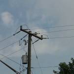 Bird flies from atop power lines perch