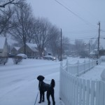 Grover my poodle in Bucknell Manor near Belle Haven during snow in winter